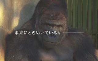イケメンゴリラがPRする名古屋市とは。シャバーニくんが採用動画界に降臨!?